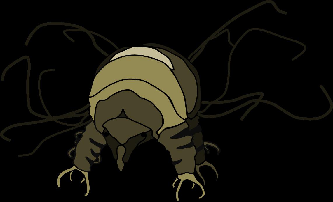 トゲクマムシ.png
